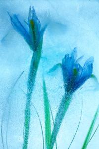 Flores Azules 57 - @ Moises Levy