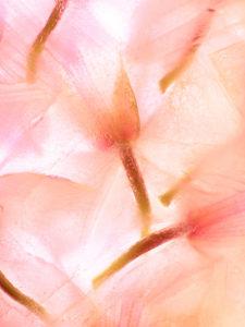 Flores Congeladas 594 - @ Moises Levy