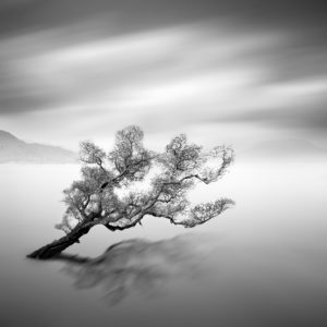Water Tree 5 - © Moises Levy
