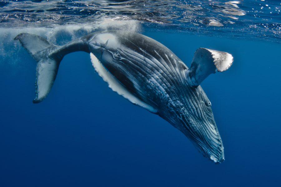 Fotografia Europea 2015: un sabato da Balene!