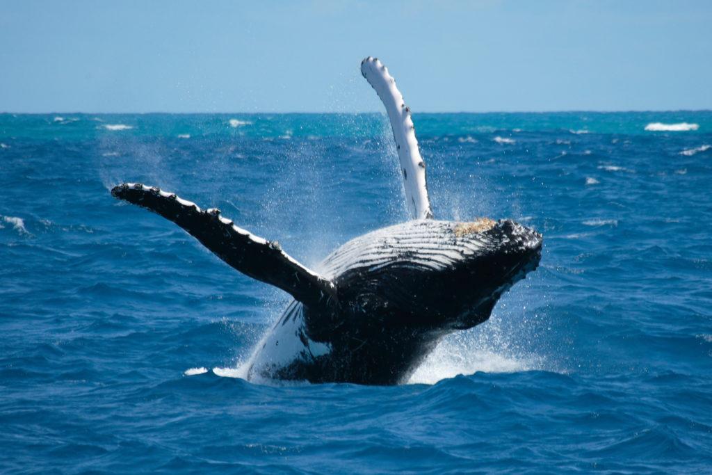 Puoi viaggiare divertendoti come una vera balena