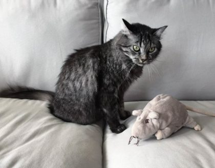 Il gatto di Schrödinger in fotografia: incertezza, indeterminazione ed entanglement