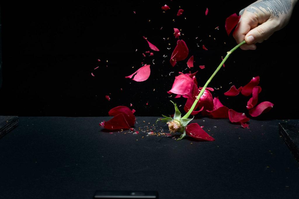 Profoto D2 Test - Rose Explosion