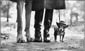 Elliott Erwitt, Ney York City, 1972