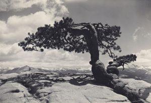 Fotografia di Ansel Adams